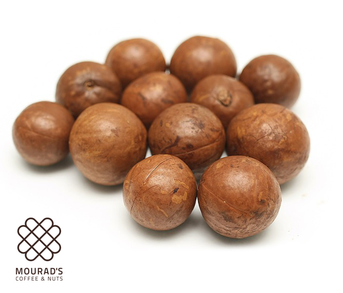 Macadamia In Shell