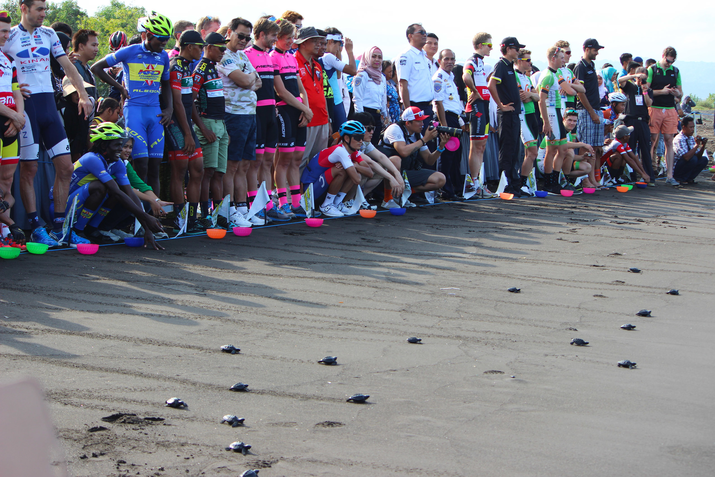 A light-hearted pre-race moment; racing turtles on the beach. Image by Simon Blake.