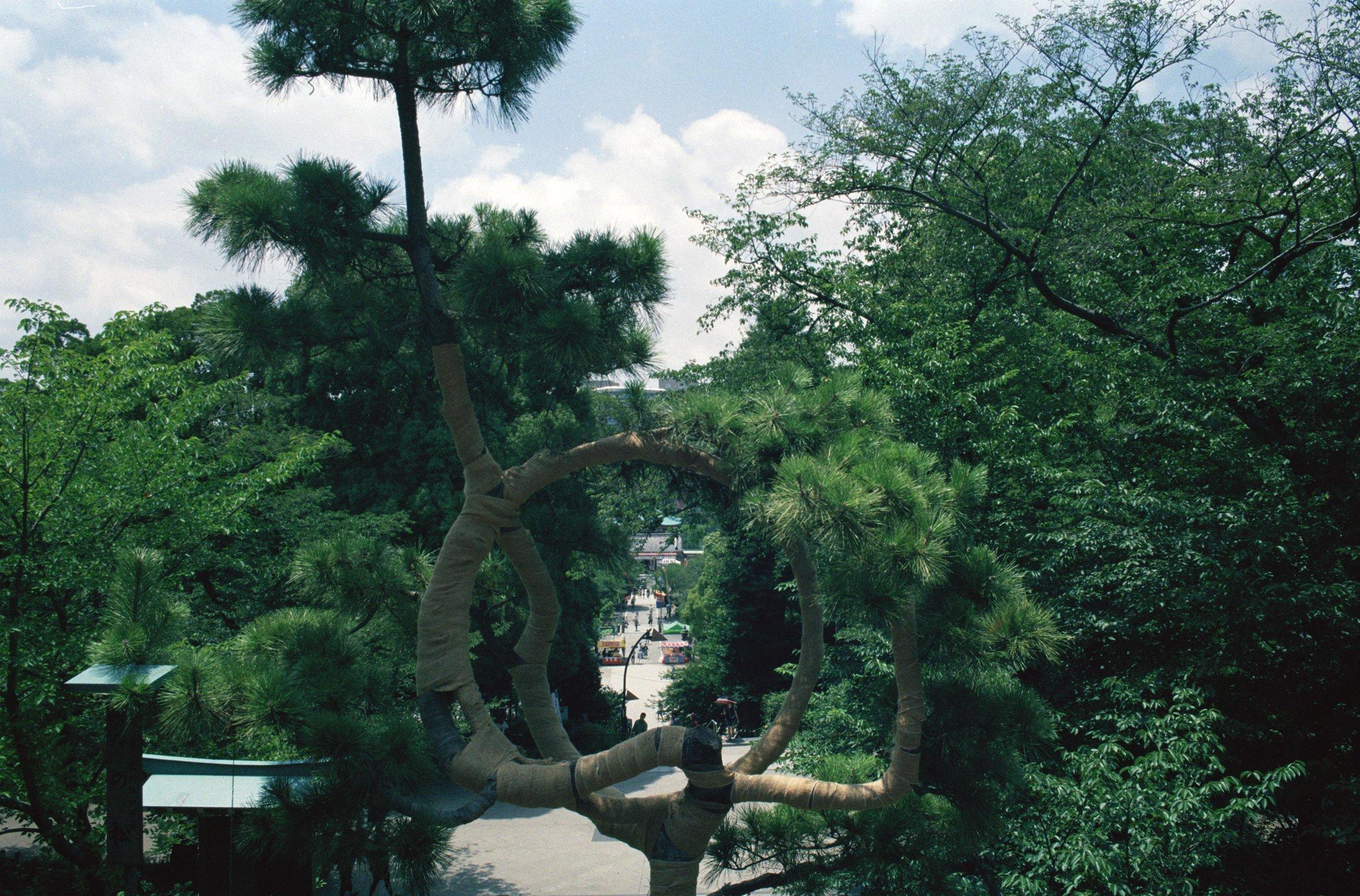 ueno tree.jpg