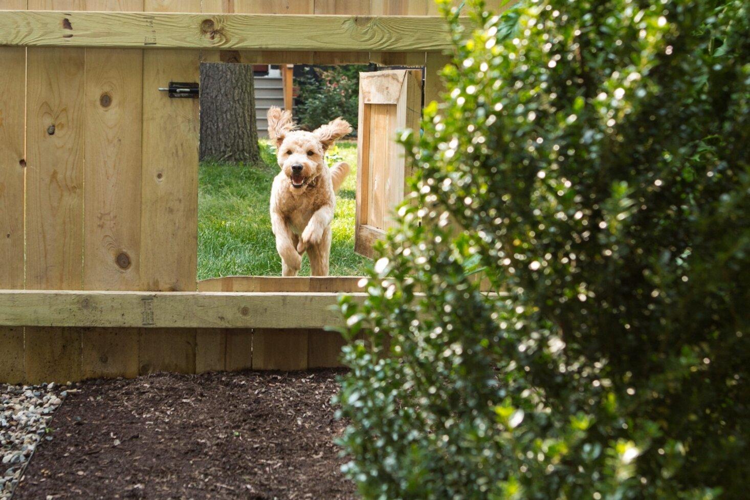 dog-door-fence-ann-arbor-michelle-adams-by-marta-xochilt-perez-1466x977.jpg