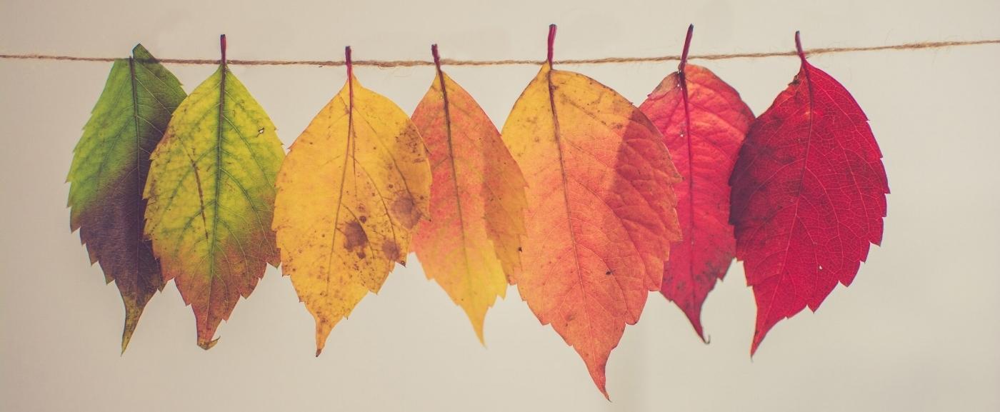 rainbow leaves.jpg
