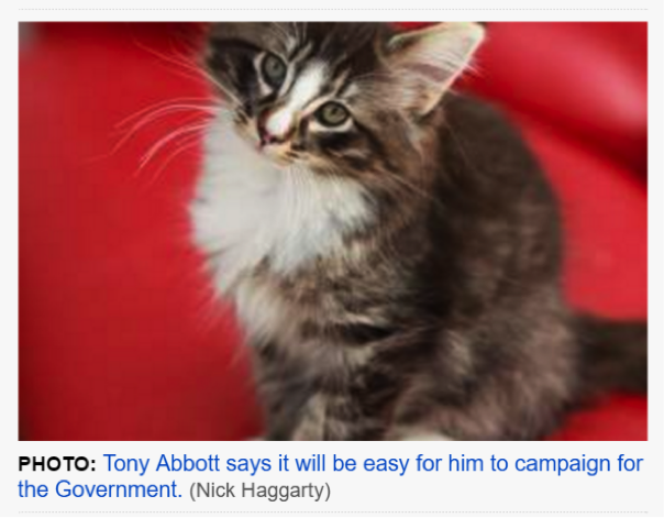 I'll admit reading the news has never been cuter, but Abbott-kitten would be even happier if you stopped saying mean things online