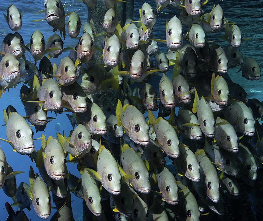 Fish Eye 7.jpg