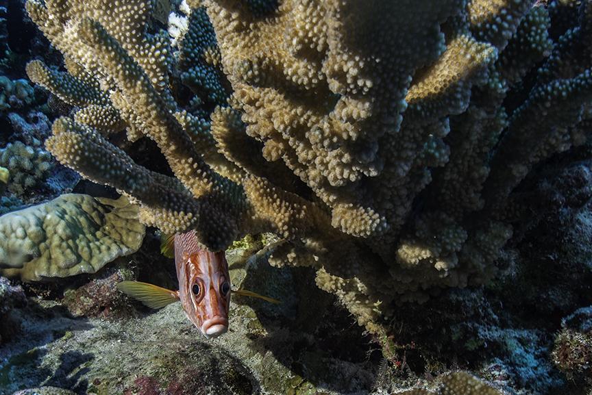 Peeking fish.jpg