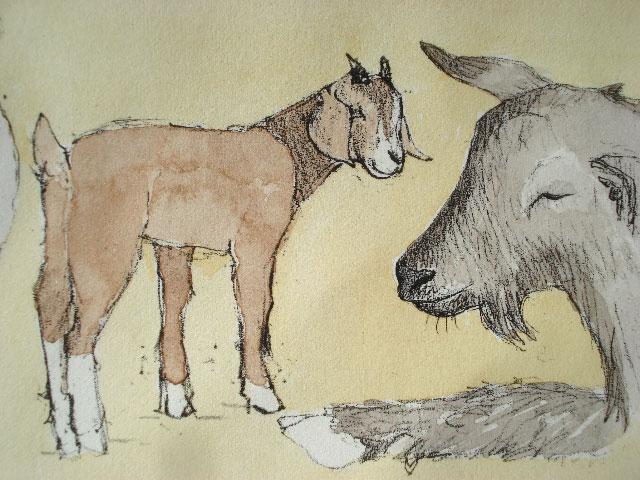 goats1.jpg