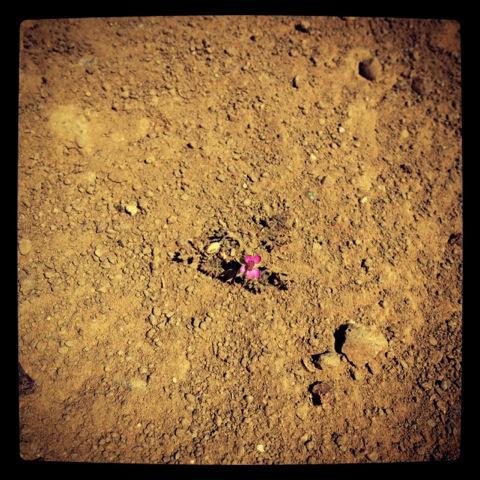 little-flower1.jpeg