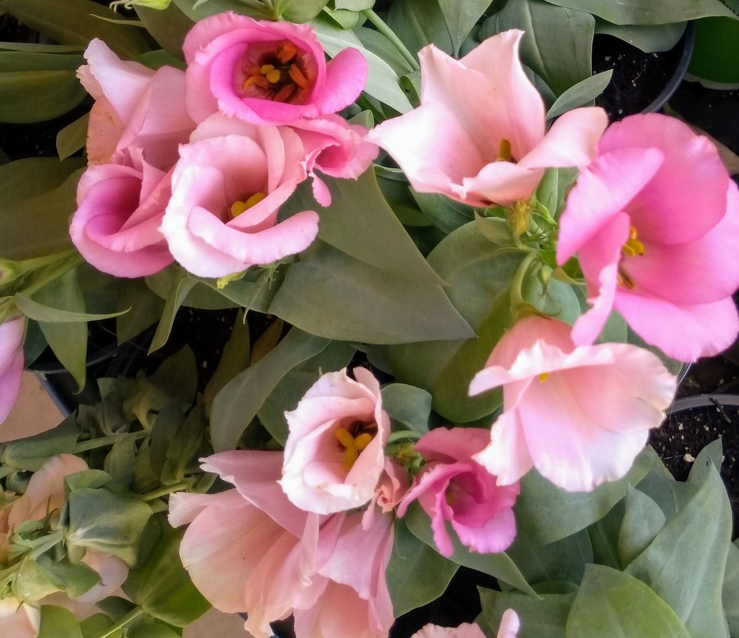 Perennials Annuals A Nursery With A Passion For Plants