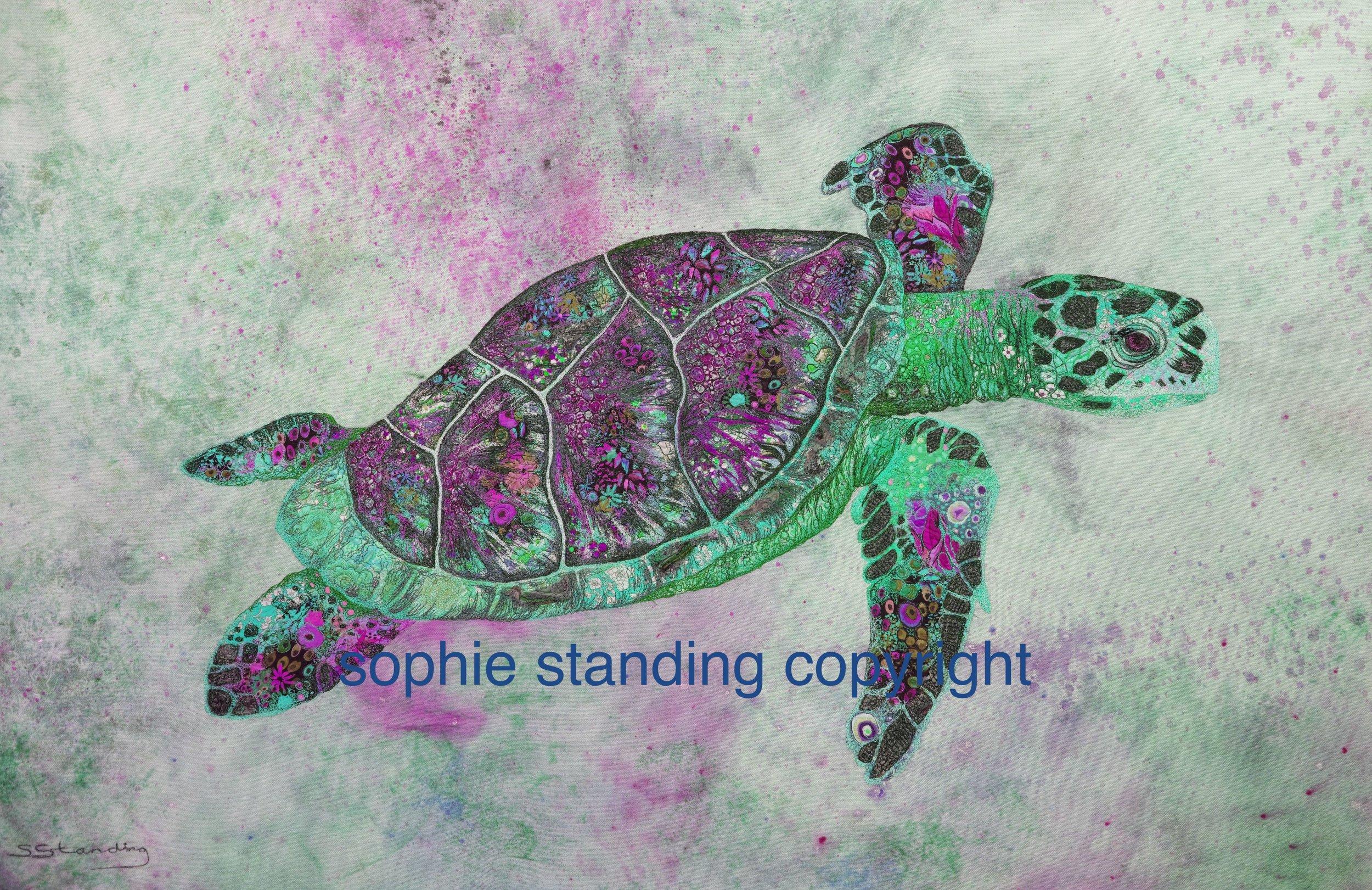 turtle_01.jpg