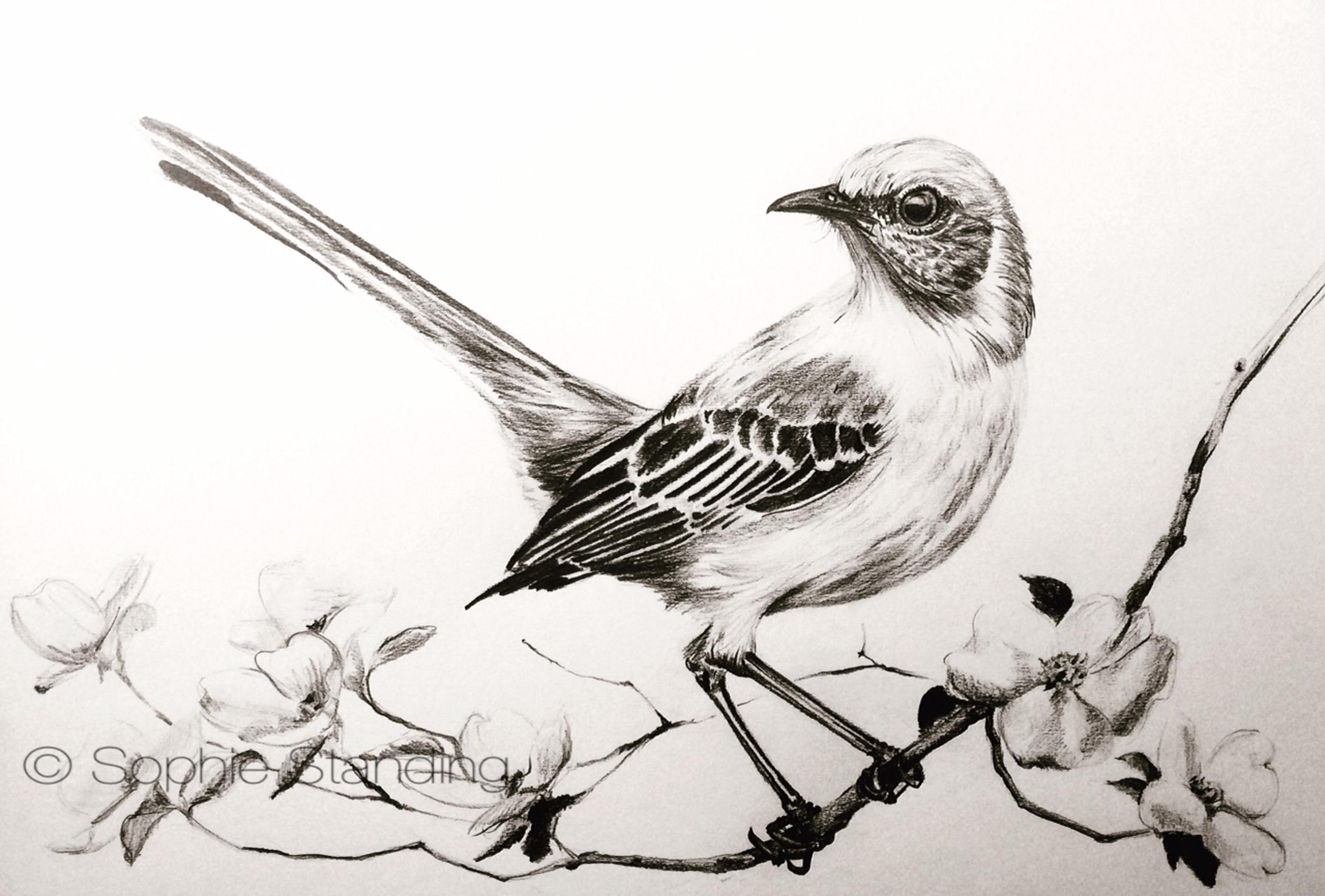 bird drawing.jpeg