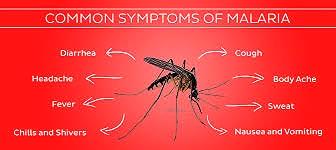 symptoms of malaria.jpg