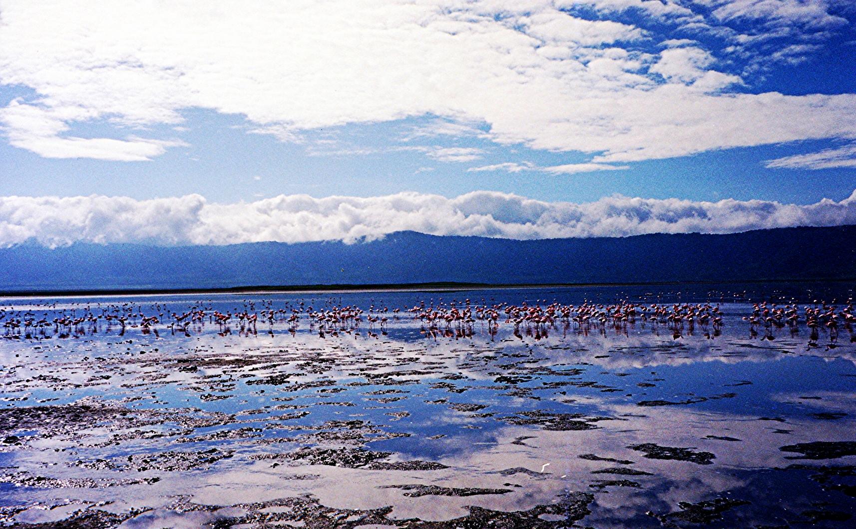 Flamingos. Serengeti.jpg
