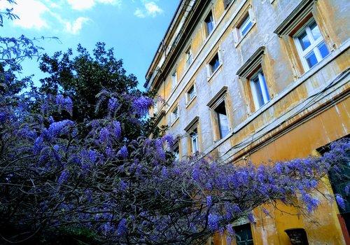 Margutta lavender.jpg