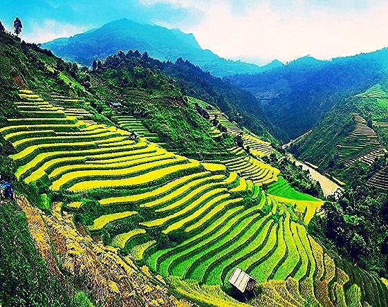 bali rice fields.jpg