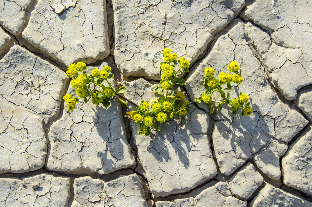 stock-photo-60147948-blooming-desert-floor.jpg