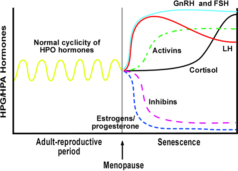 Schematic of Circulating Hormonal Changes that Occur With Menopause (from Atwood and Bowen, 2011; Experimental Gerontology)