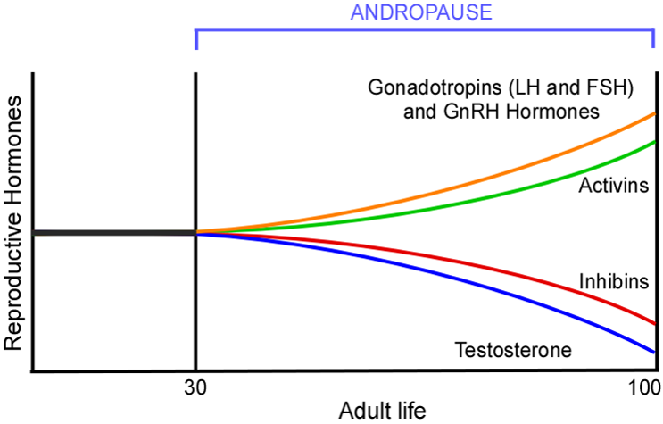 Schematic of Circulating Hormonal Changes that Occur During Andropause (from Atwood and Bowen, 2011; Experimental Gerontology)