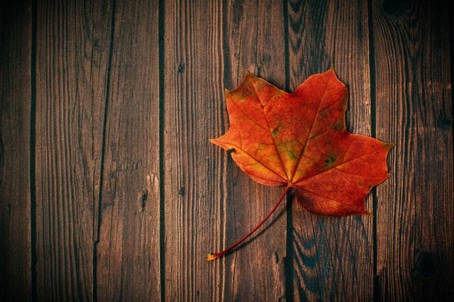 colors-dark-fall-leaves-602579.jpg