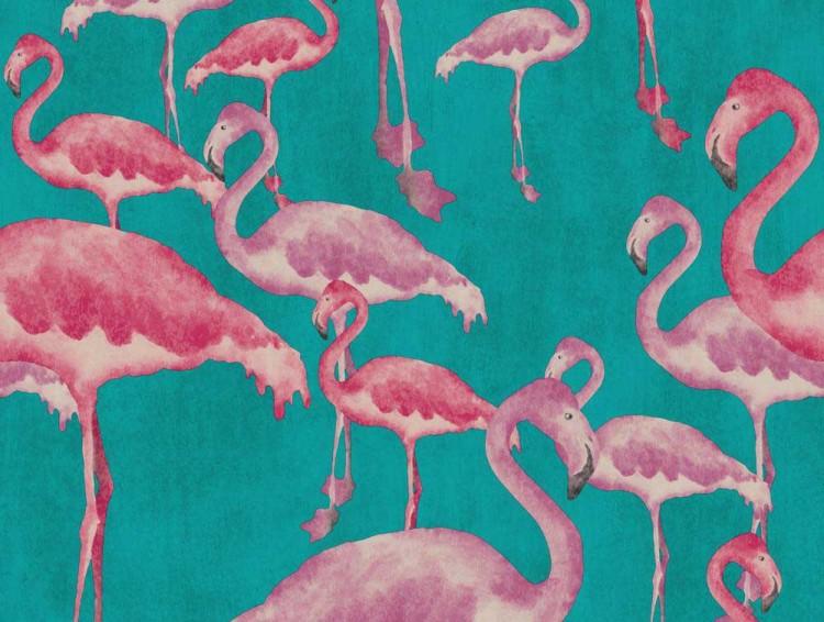 Flamingo-Beach4-1000px-60385aaca52998f63c563135568cf42b