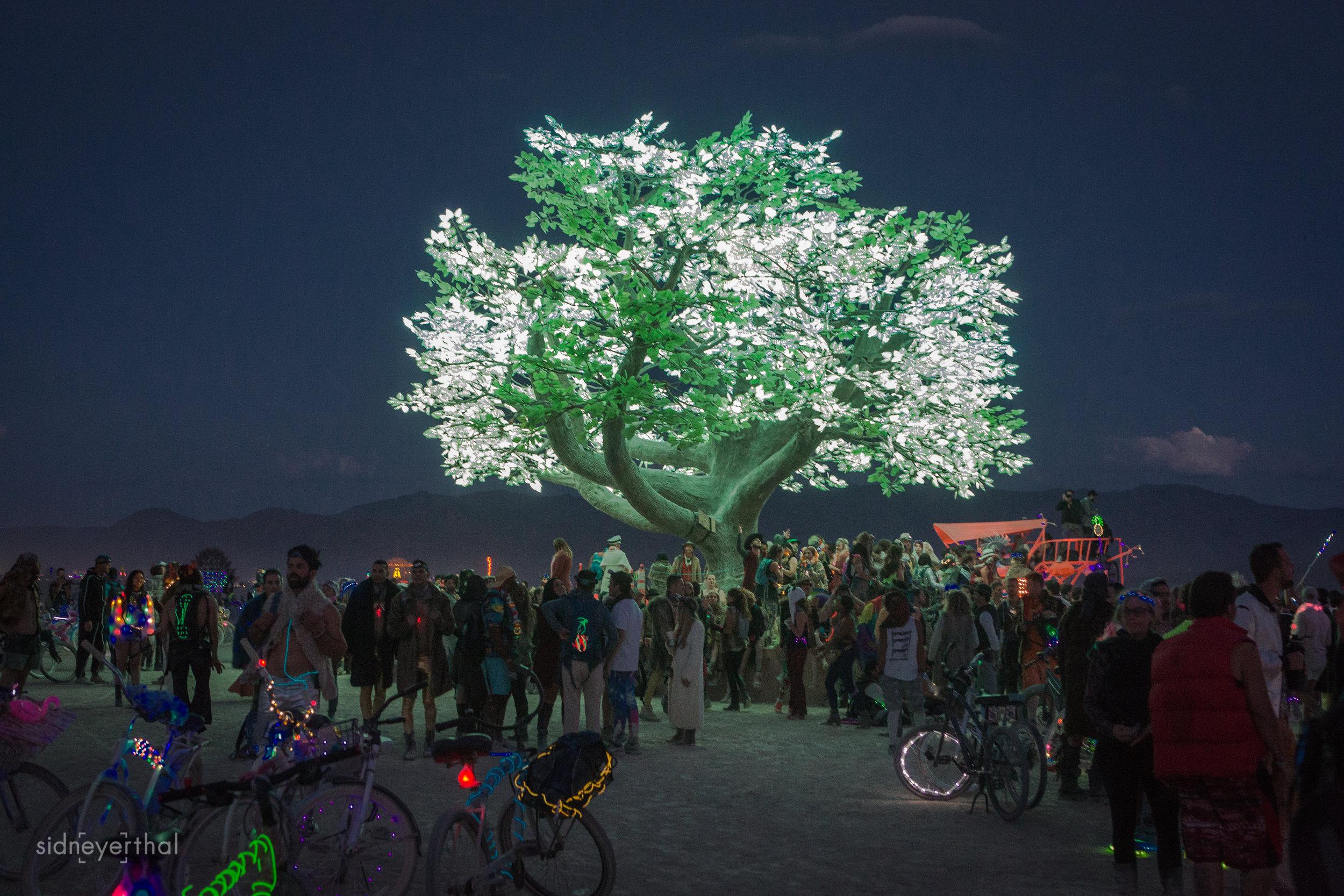 TreeofTenere Sidney Erthal.jpg
