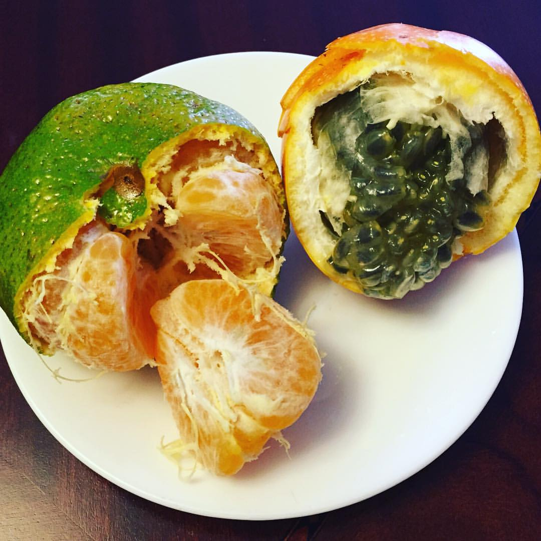 #Fruit is a great way to start your morning. The natural sugars and high #fiber/#water content provide gentle #energy throughout the day. Pictured: #passionfruit and #tangerine. Can't wait to try all the exotic fruits of #Colombia :) #healthywhiletraveling #bushwick #bushwicknutrition #lazynutrition #lazynutritionist  (at Bogotá, Colombia)