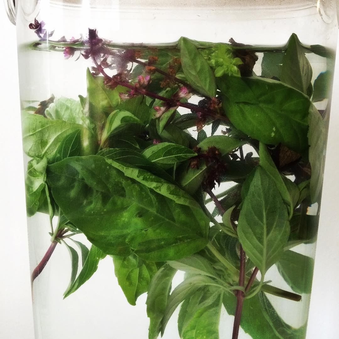 What to do when you're not sure what else to make with all the extra/awesome herbs your neighbor gave you? Make #infusedwater! #mint #basil #chocolatemint #water #hydration #bushwick #bushwicknutrition #lazynutrition #lazynutritionist