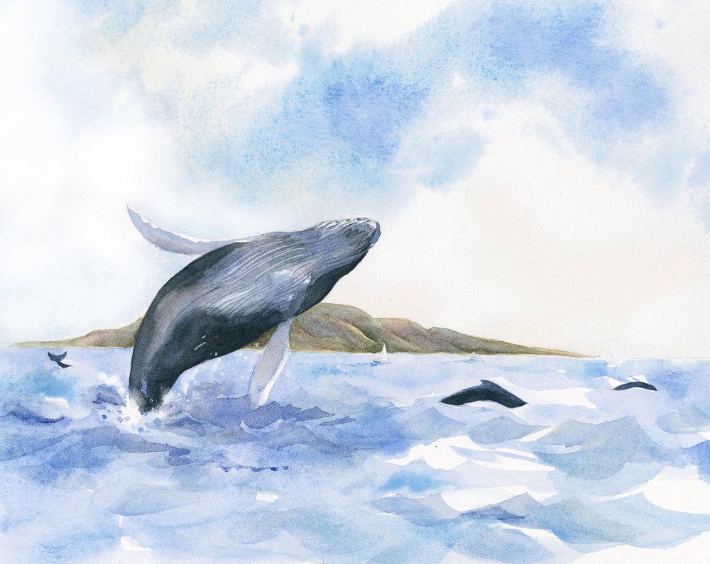 humpback+whales.jpg