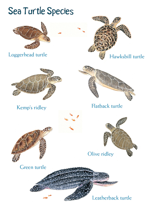 sea turtle card.jpg