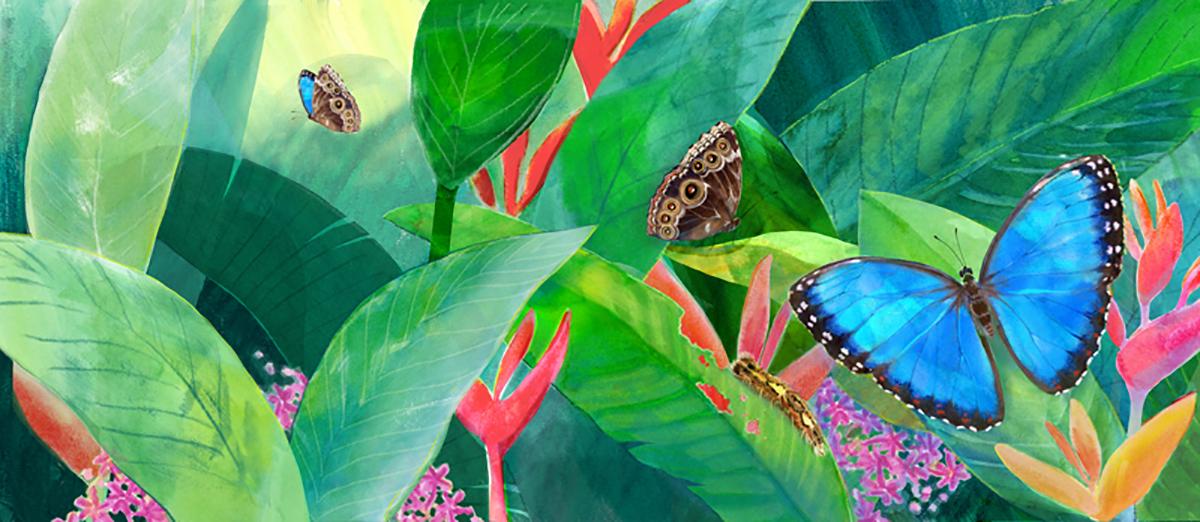 butterflycover.jpg