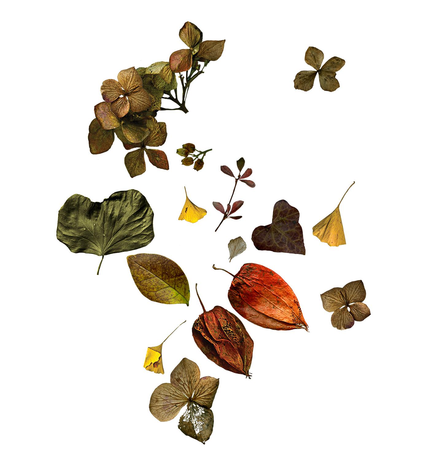 botanica-seca_experimentos.png