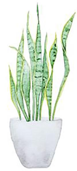 Plant_SnakePlant.jpg