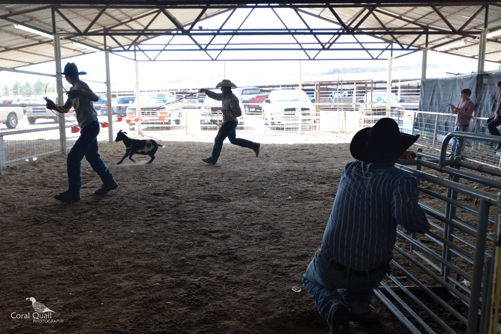 _Goat Rodeo.jpg