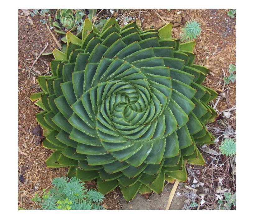 fractal plant.jpg