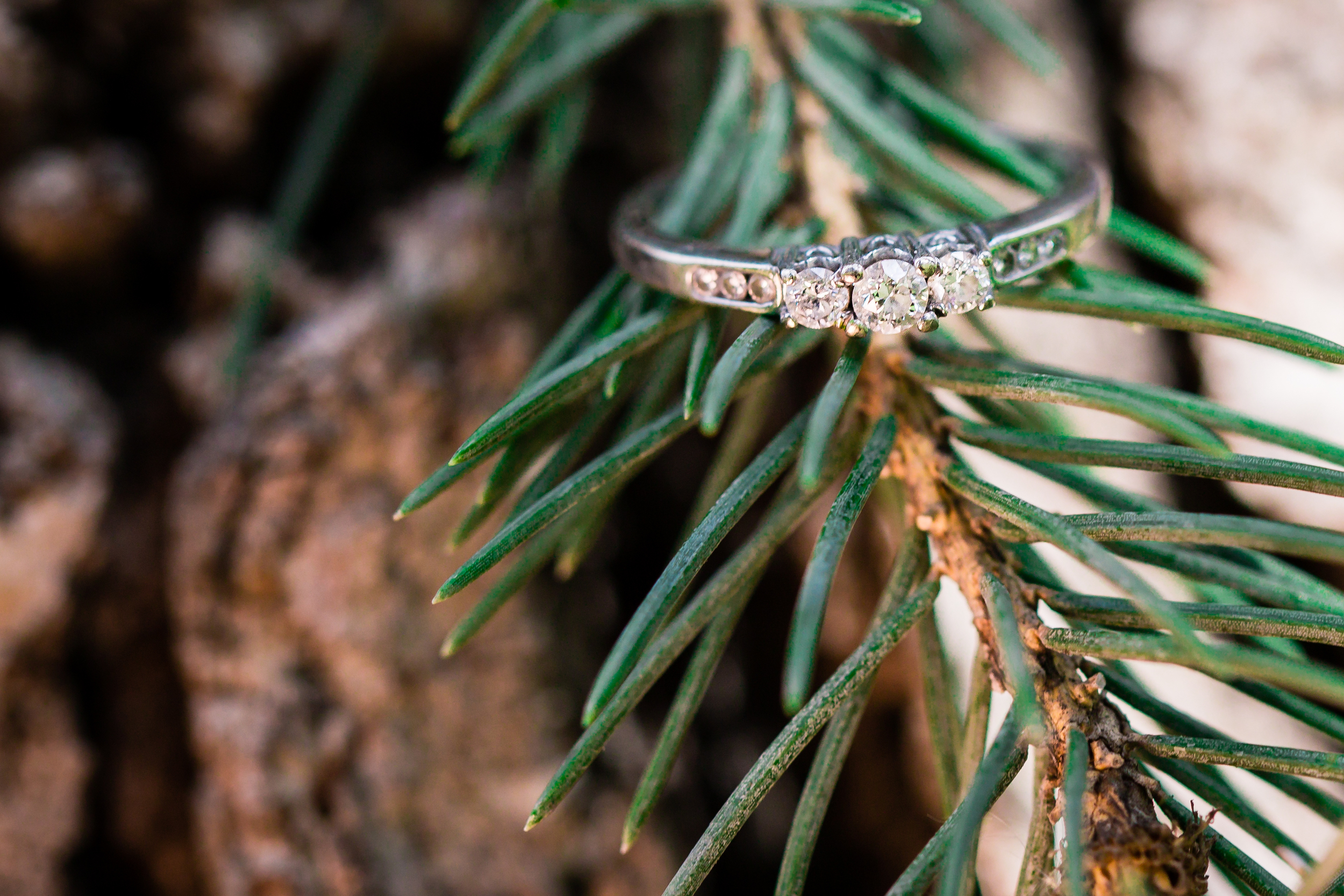wedding ring on pine branch