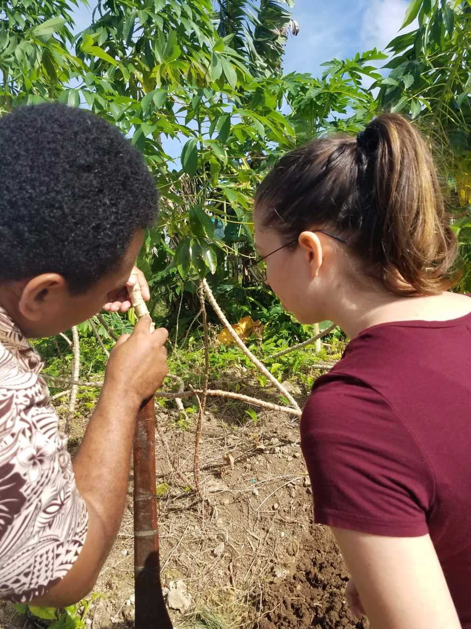 The principal teaching Dixie about cassava