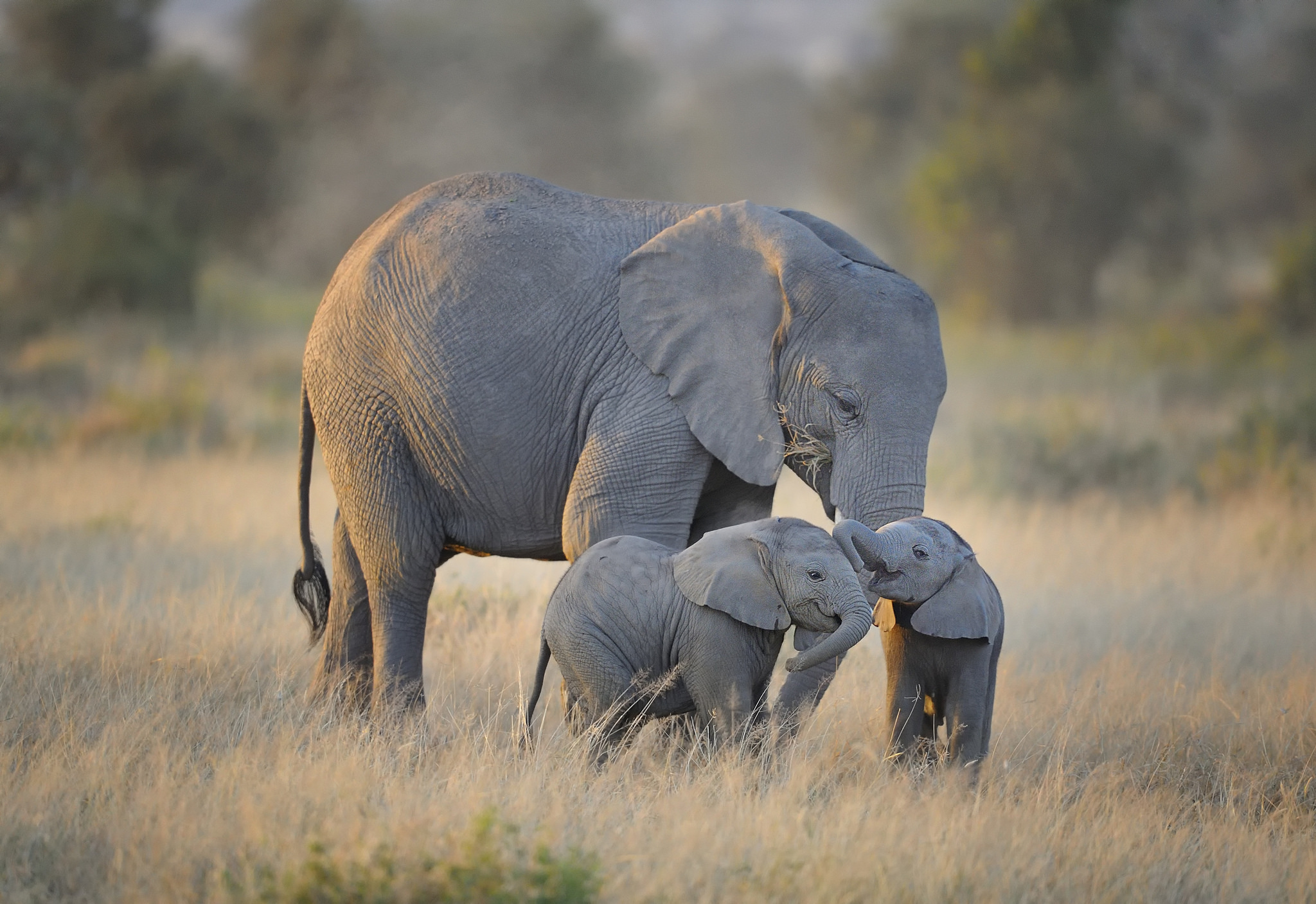 Who can fail to be moved by an elephant? Photograph: Diana Robinson