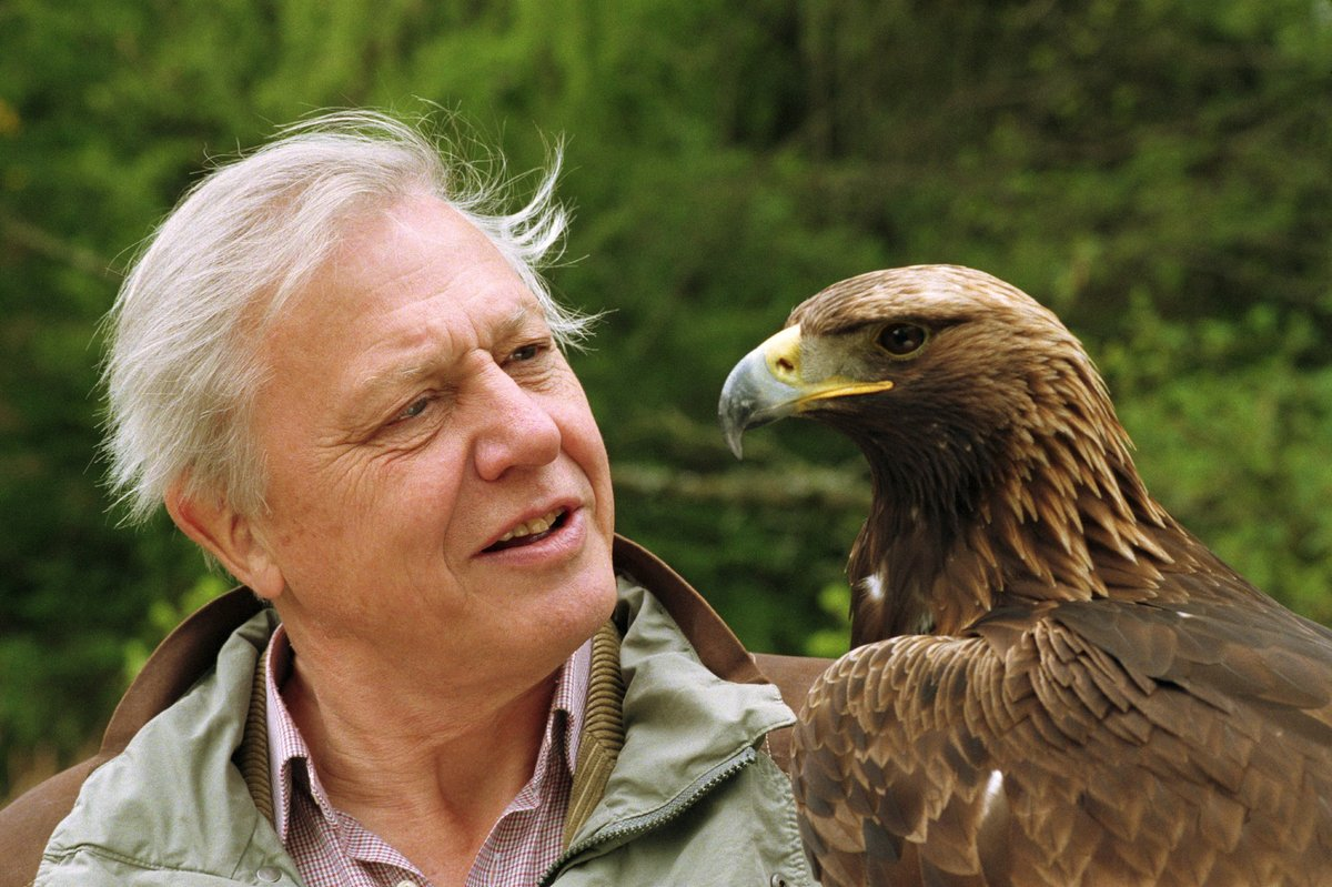 Eagle-eyed David Attenborough. What's the word? The word is ...