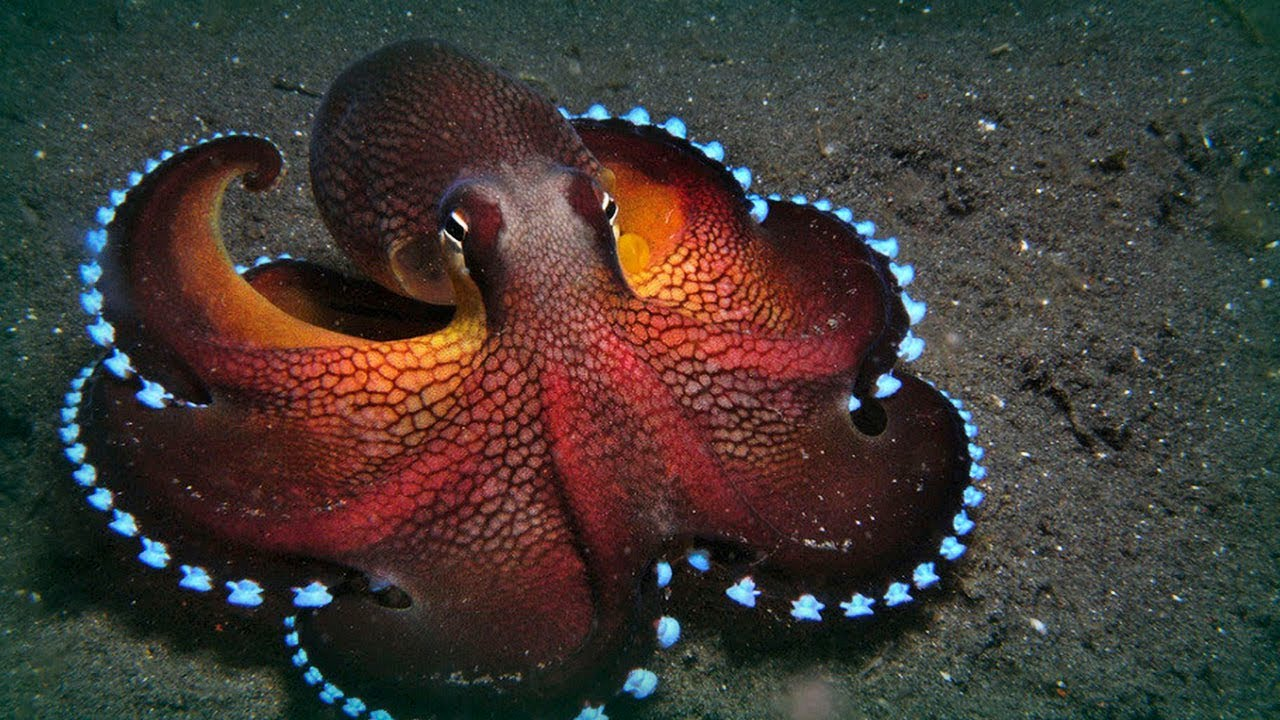 Dr Octopus. He can do and be anything.