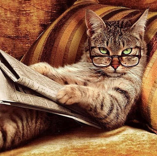 Utterly gratuitous clever feline image doing a crossword. Catnip for the internet.