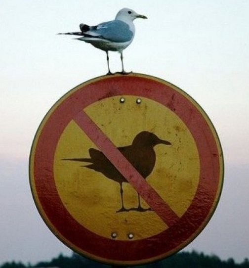 Sign of the times? Bird is the word? Tweet that.