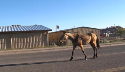 One-horse town?