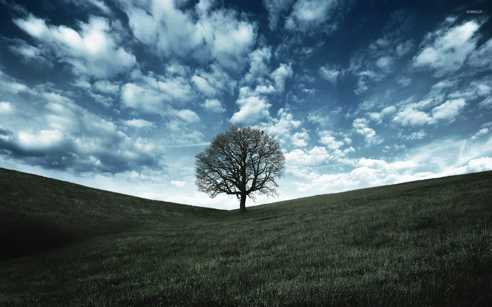 From one brave tree … to a forest