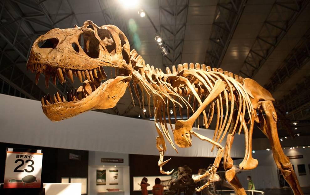 DoYouThinkHeSaurus? The Gorgosaurus