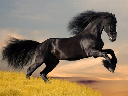 Leap of the imagination? As told by … Black Beauty