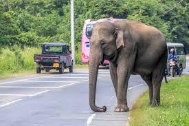… or indeed the urban elephant