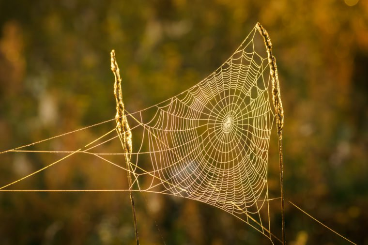 Orb webs are fantastically designed and flexible