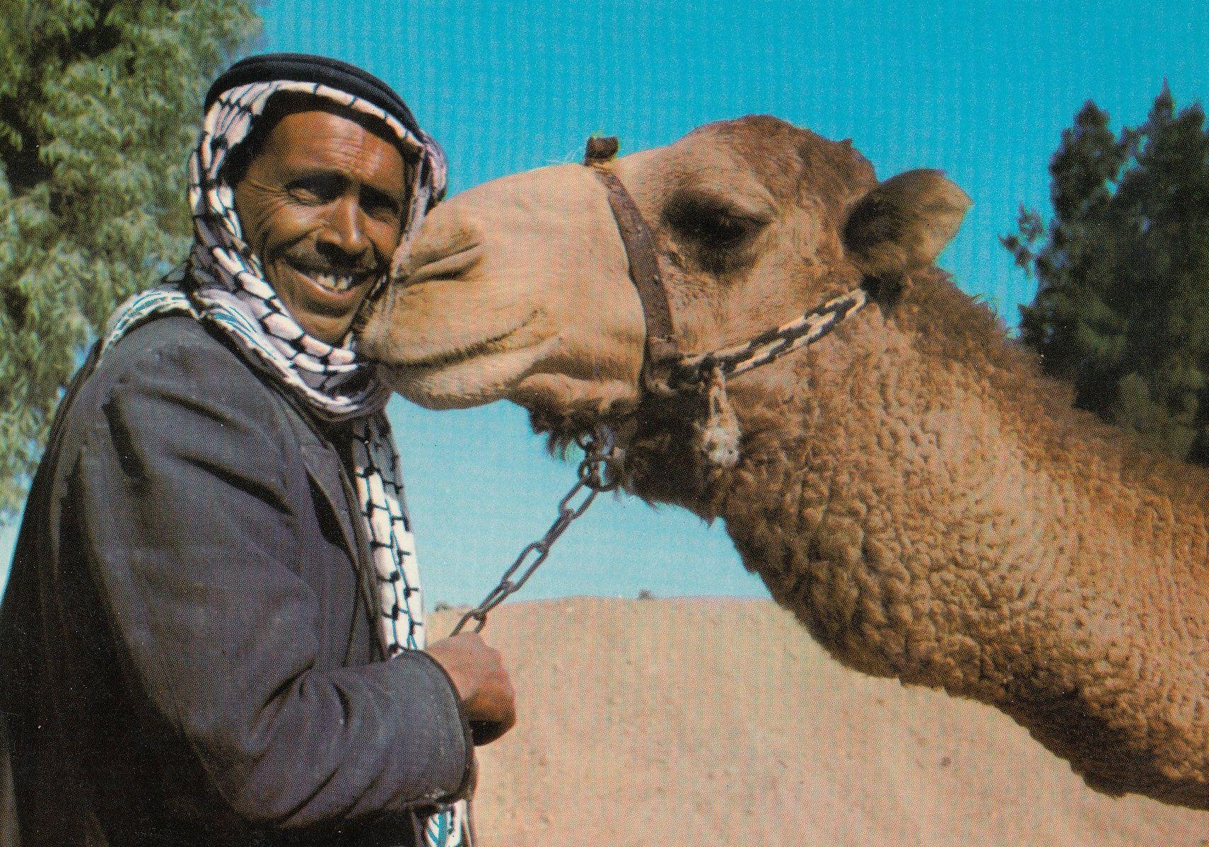 True livestock love: bedouin and best friend