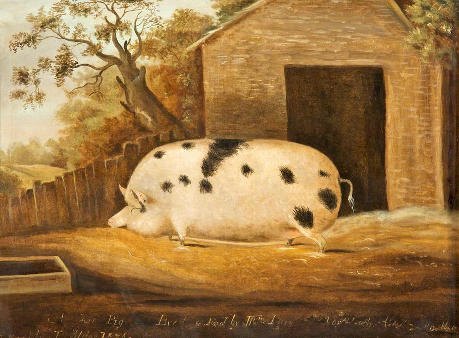 Gloucester Old Spot by John Miles, 1834.
