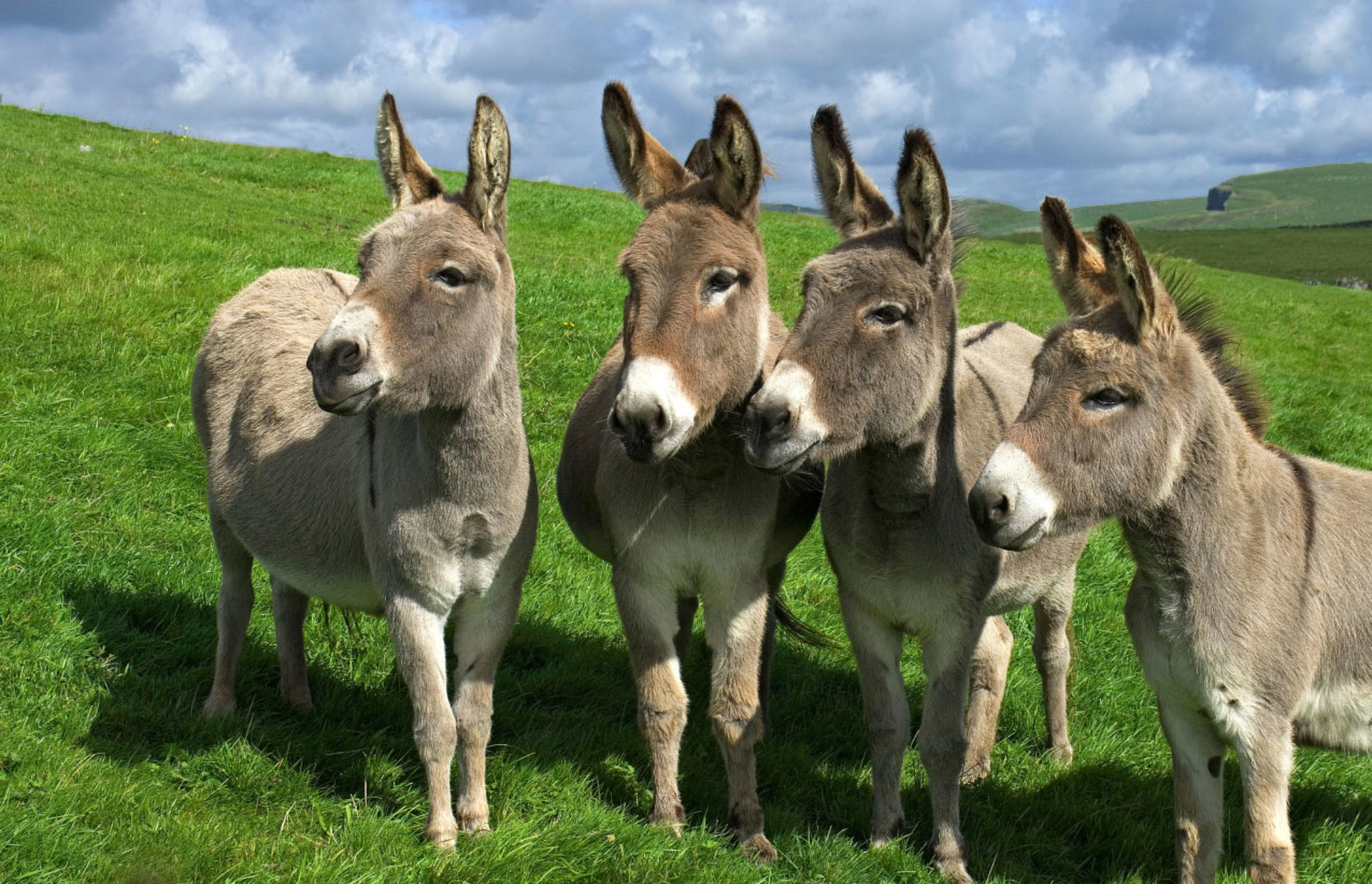 Don't forget donkeys