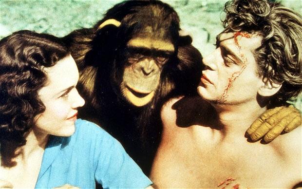 Cheeta with his co-stars Jane and Tarzan, aka Maureen O'Sullivan and Johnny Weissmuller