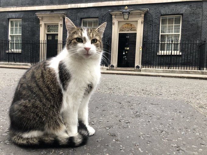 Larry the Cat, at 10 Downing Street. He's seen a few rats scurrying about …